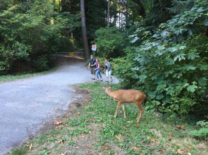 downtown-deer