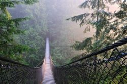 ORG-rentpicnic-north-vancouver-capilano-suspension-bridge-D08092012T215006M3I0