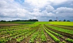agriculture_shutterstock_98875505