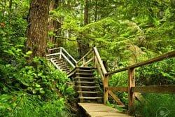 Pacific Rim National Park Reserve.Леса Британской Колумбии:5 мест, которые нужно посетить/Наш Ванкувер
