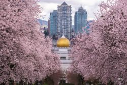 весна в Ванкувере, цветение вишни в Ванкувере
