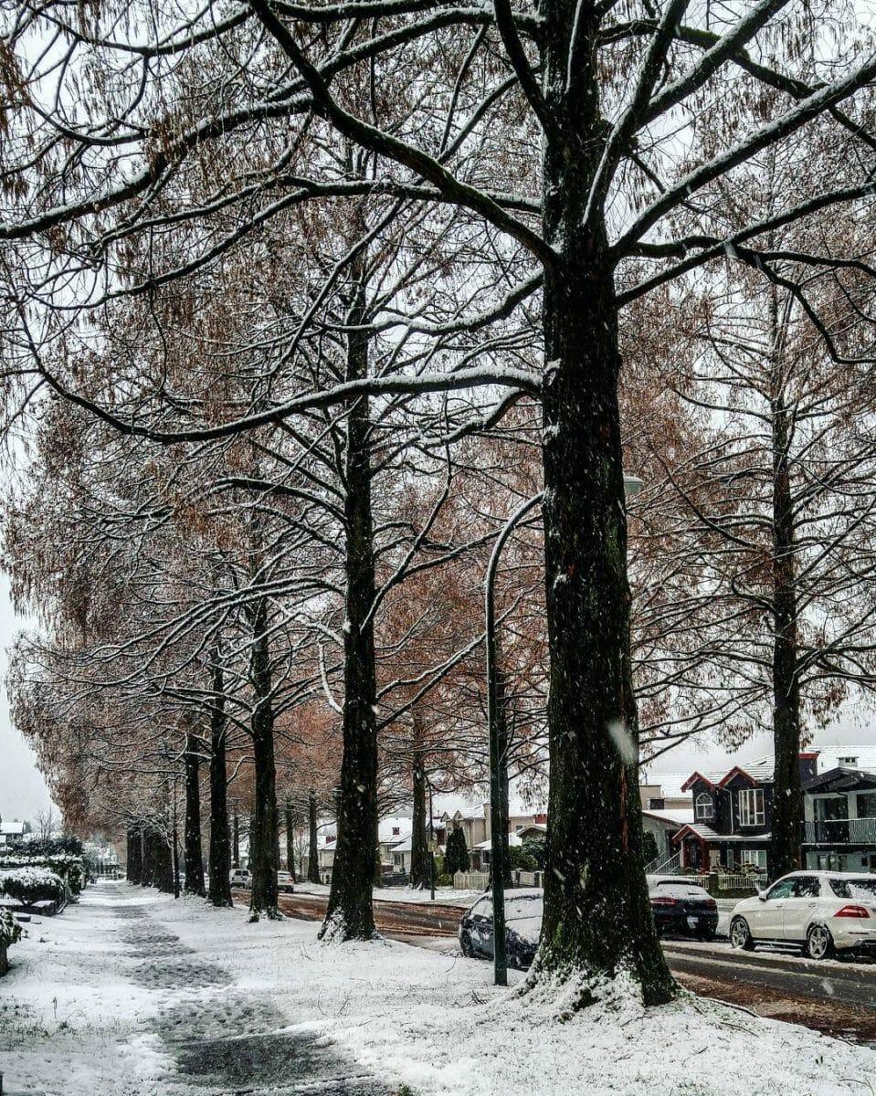 снег в Ванкувере, зима в ванкувере