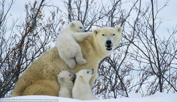 национальные парки Канады, национальные парки в Канаде, бесплатный вход 2017,