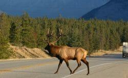 дикая природа, дорога, Канада, национальные парки