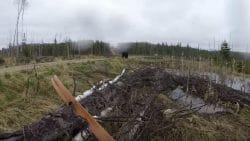 медведь напал на человека в Канаде (ВИДЕО)