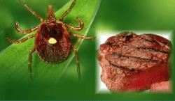 аллергия на красное мясо, клещ