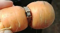 кольцо на морковке