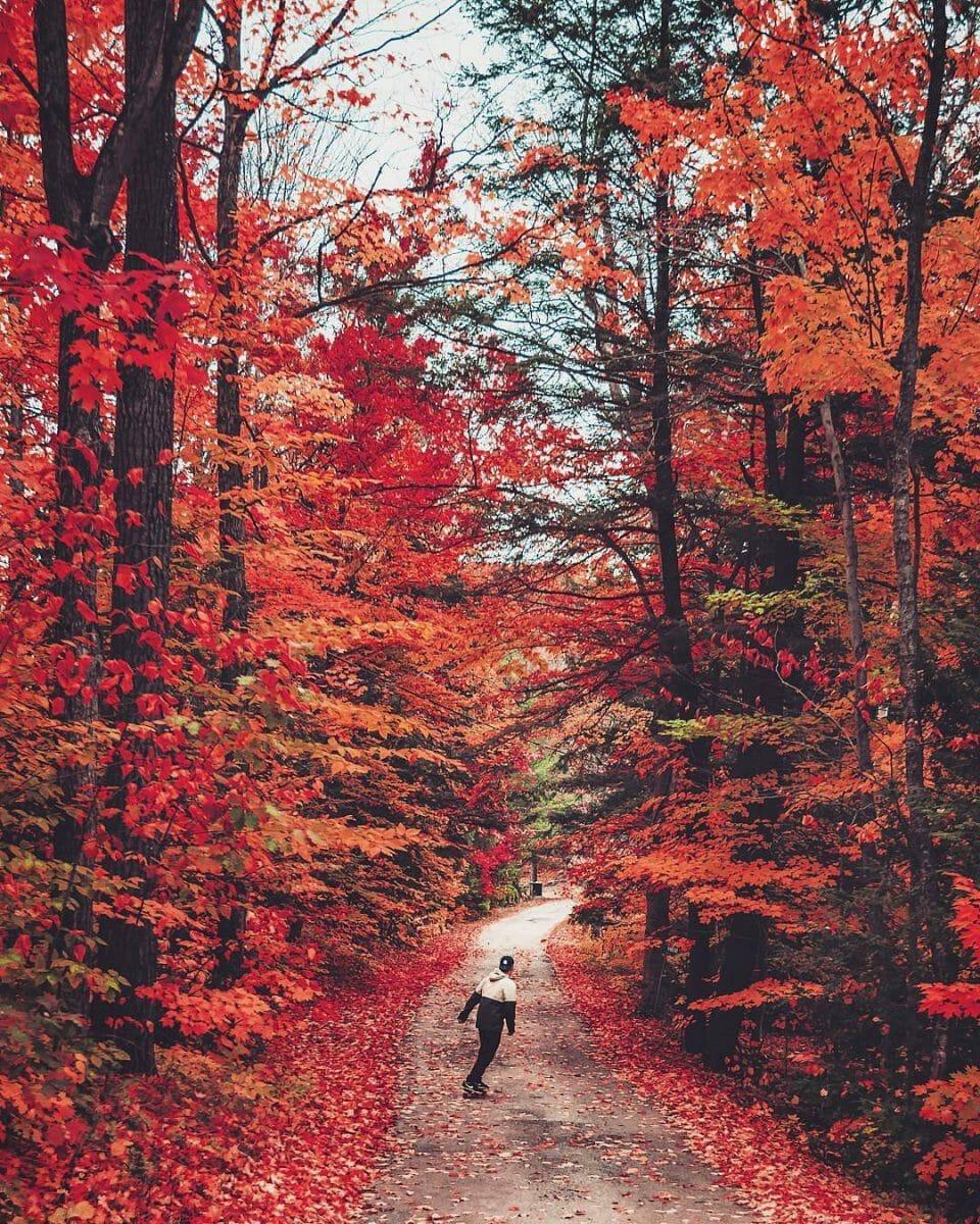 осень в Канаде, musoka