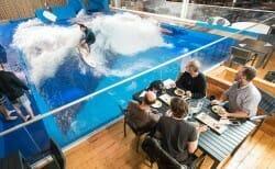 ресторан oasis surf в Канаде